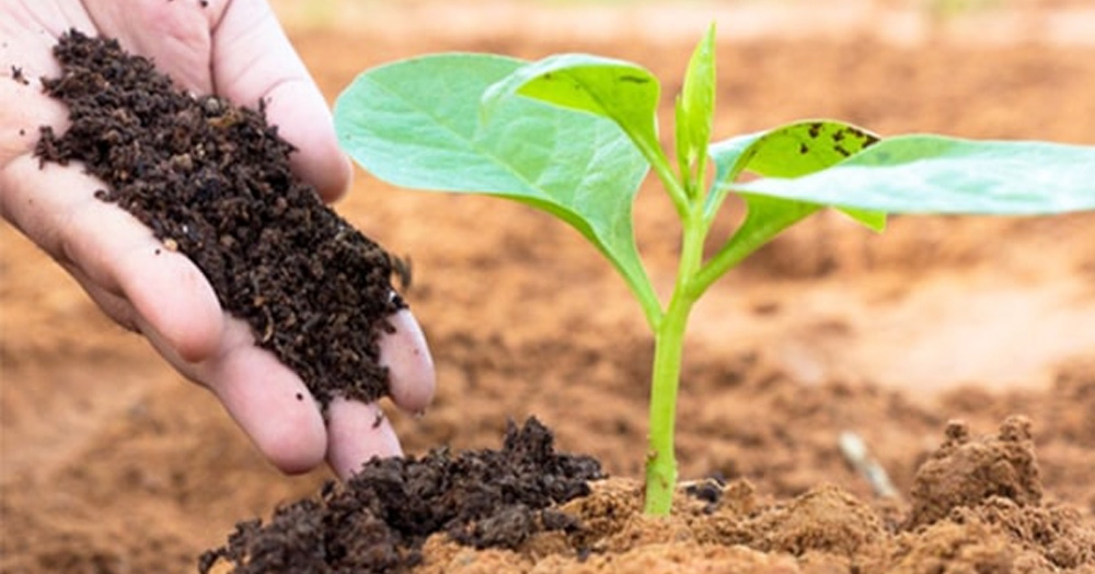 Tìm hiểu về phân bón hữu cơ