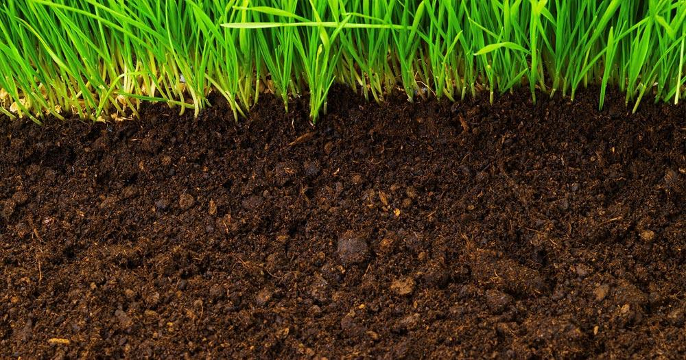 Tăng hàm lượng dinh dưỡng cho đất trồng